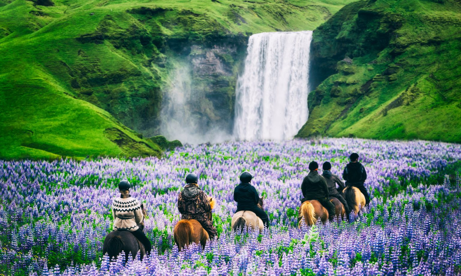 people riding icelandic horses in lupine field with skogafoss in the backdrop
