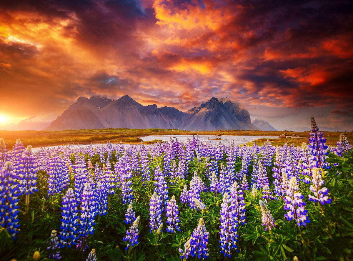 Sunrise at Stokksnes Peninsula and Vestahorn mountain in the distance.