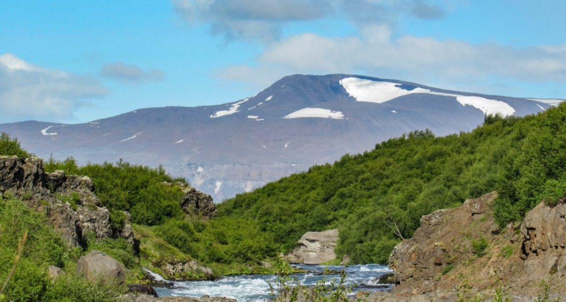 vegetation in iceland