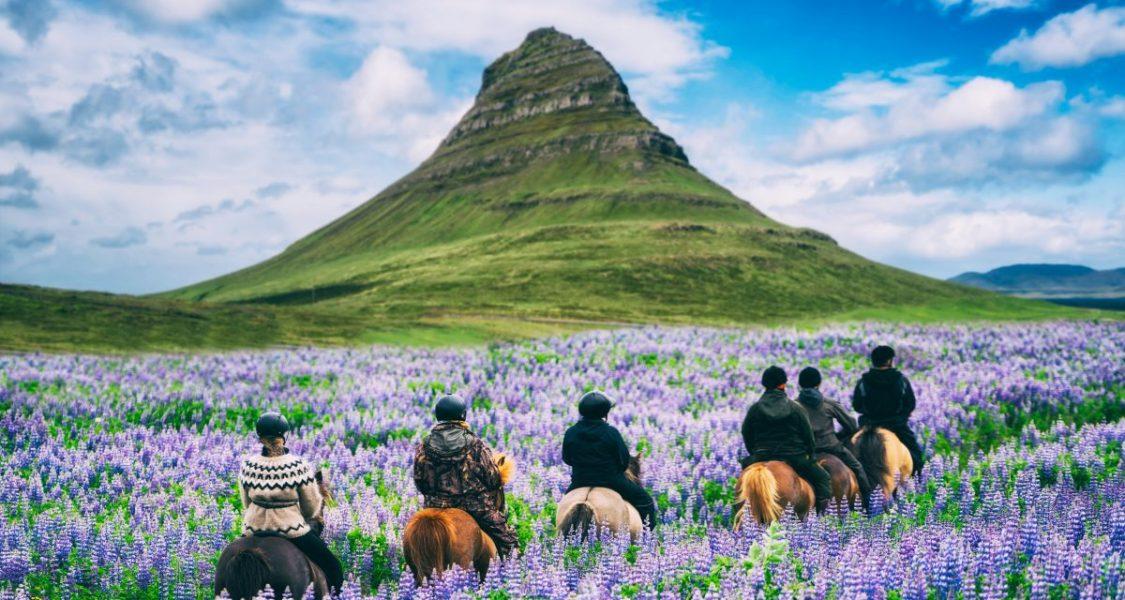 kirkjufell and lupine flower fields in iceland
