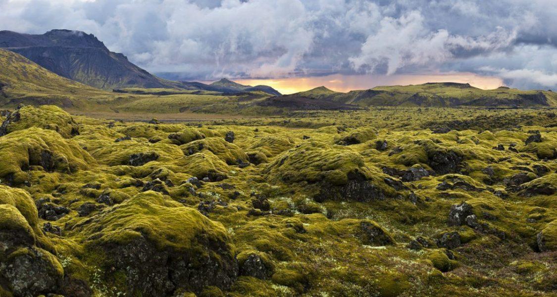 moss fields in iceland